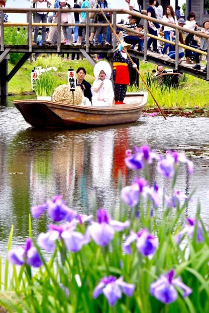 綺麗な花菖蒲と嫁舟の風景。。20170611