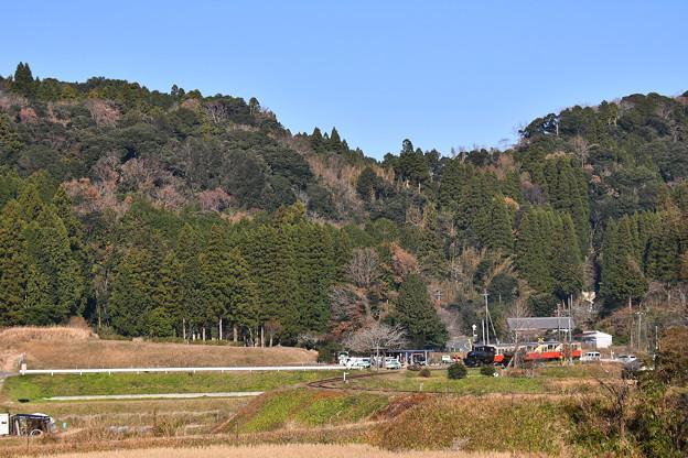 撮って出し。。紅葉風景に小湊鉄道トロッコ列車走る 1210日