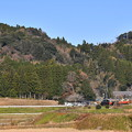 写真: 撮って出し。。紅葉風景に小湊鉄道トロッコ列車走る 1210日