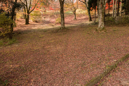 2014紅葉の鳥見山公園・3