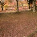 Photos: 2014紅葉の鳥見山公園・3