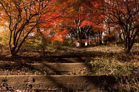 2014紅葉の鳥見山公園・4