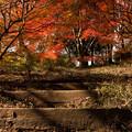 Photos: 2014紅葉の鳥見山公園・4