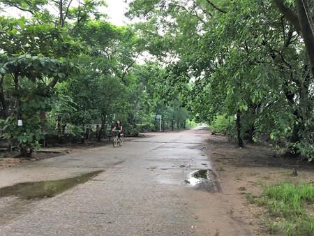 犬と花園の道 (2)