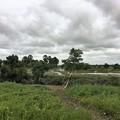 写真: Twantayの田圃 (1)