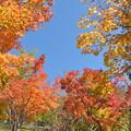 Photos: 富里ダムの紅葉