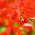 11月5日 ミツバチの仕事