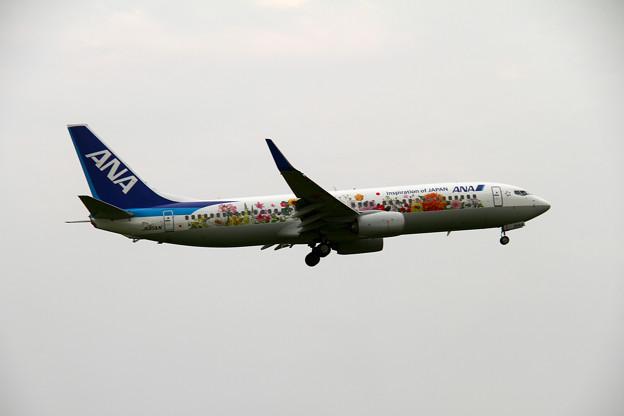 ANA フラワージェット B737-800