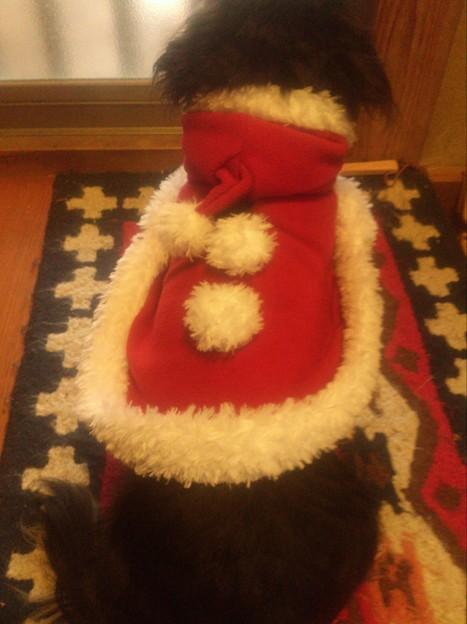 サンタ犬太郎