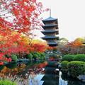 写真: そうだ京都行こう