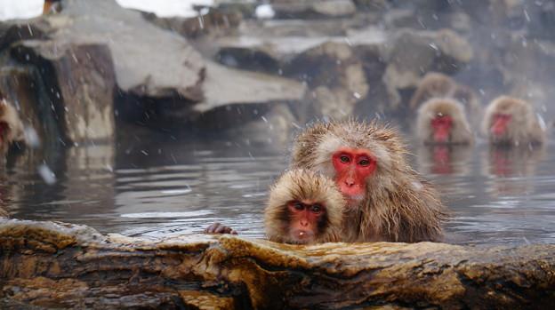 長野猴子泡湯03