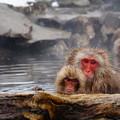 写真: 長野猴子泡湯03