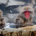 写真: 長野猴子泡湯05