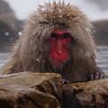 写真: 長野猴子泡湯08