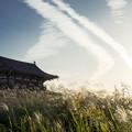 写真: susuki35aps-09536