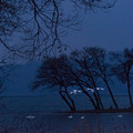 白鳥湖北-01439_ed