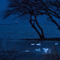 湖北白鳥-01446_ed