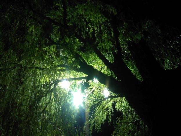 灯りに照らされて