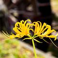 写真: 里山に咲く秋の気配