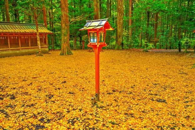 銀杏黄葉の舞い散る境内で・・・たった今、風が止まった。