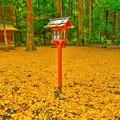 写真: 銀杏黄葉の舞い散る境内で・・・たった今、風が止まった。