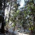 Photos: 新雪の登山道