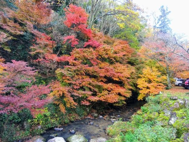 伽耶院 志染川の紅葉
