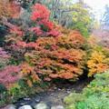 写真: 伽耶院 志染川の紅葉
