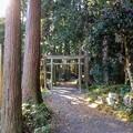 Photos: 瓜割の滝への鳥居