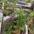 Photos: 木の芽がいっぱい