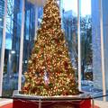 八重洲のビルのクリスマスツリー