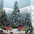写真: 2017*築地・聖路加タワーのクリスマスツリー