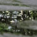 Photos: 雨あがり