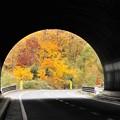 写真: 秋色1