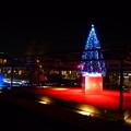 クリスマスツリー@ZEN庭園