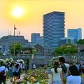 夕日とバラ園