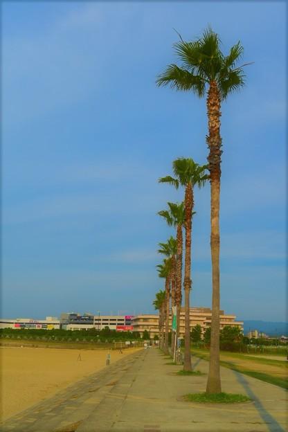 ヤシの木が美しい人工ビーチ