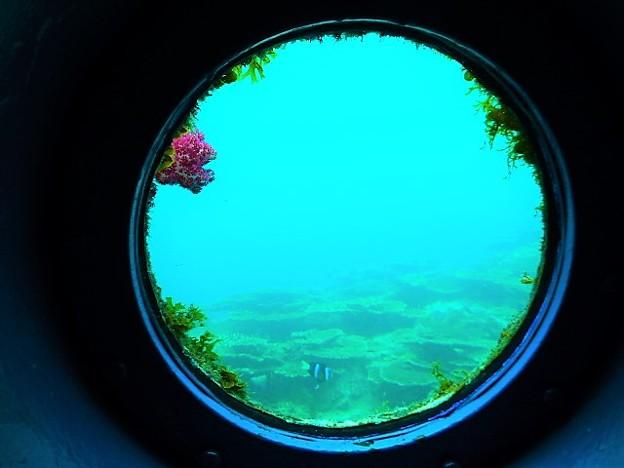 サンゴや魚が見える
