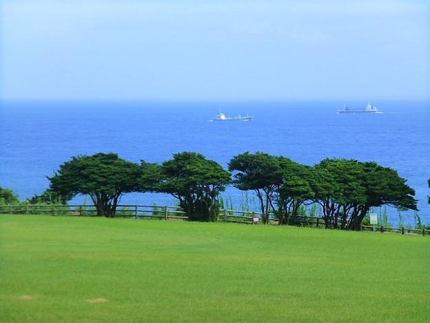 本州最南端の地 望楼の芝