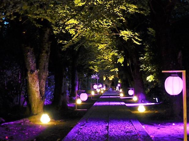 写真: ライトアップされた極楽寺境内