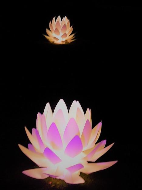 蓮の花が浮かぶ極楽寺境内
