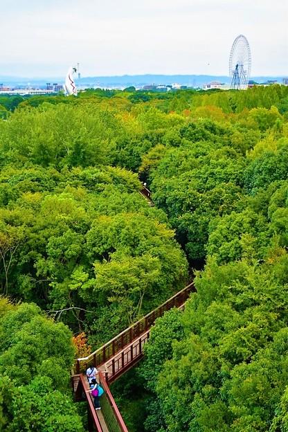 森の空中観察路