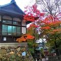 犬山城界隈の紅葉