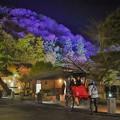 写真: 嵐山と人力車