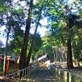 Photos: 山王総本宮 日吉大社