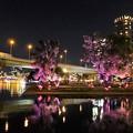Photos: 中之島ライトアップ