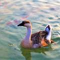 写真: ホテルザ・パヴォーネ前のモネの池