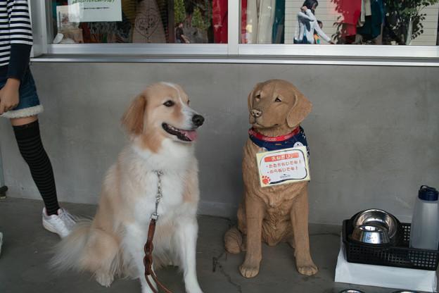 写真: 看板犬