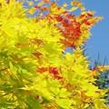 写真: 秋の色づき