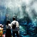 写真: 水の中